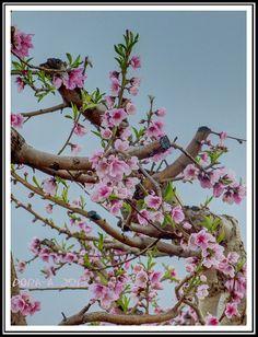 Galilee in bloom ~ Oh to see Israel in spring.