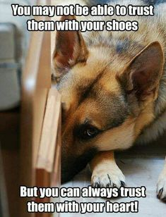 Wicked Training Your German Shepherd Dog Ideas. Mind Blowing Training Your German Shepherd Dog Ideas. Funny Dog Memes, Funny Dogs, Funny Animals, Cute Animals, I Love Dogs, Cute Dogs, German Shepherd Puppies, German Shepherds, My Bebe