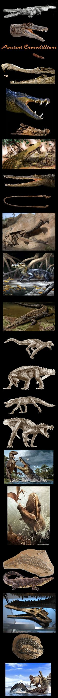 Prehistoric Crocodiles  Thanks to Steve Irwin, I love crocodiles
