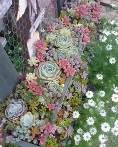 Succulent garden design is a growing trend that is gaining popularity as more and more gardeners realise the potential of this unusual and varied plant species that requires almost zero maintenance. Succulent Planter Diy, Succulent Landscaping, Succulent Gardening, Succulent Arrangements, Planting Succulents, Planting Flowers, Succulent Rock Garden, Fall Arrangements, Indoor Gardening