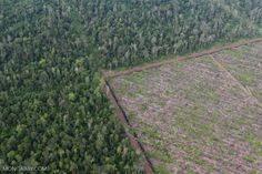 BREAKING: Norway commits to zero deforestation. Political System, Environmental Science, Social Justice, Conservation, Railroad Tracks, Norway, Restoration, Zero, Politics