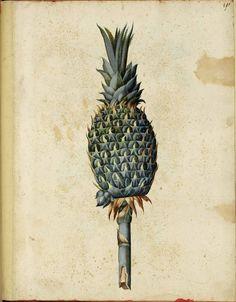 Botanical-Fruit-Pineapple-Italian.jpg (1823×2338)