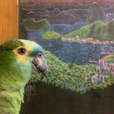 "Parrot ""Carioca"" (Rio de Janeiro chalk art by Alex M.) - 📷: Brazil, Sao Paulo, 2012 💛💚🐦 ©BigDigitalArt#bigdigitalart#graphicdesign#graphicdesigner#designgrafico#disenografico#digitalart#cores#colors#photoart#photodesign#instagram#petphotography#photography#petlovers#pets#closeup#bird#enjoythelittlethings#love#parrot#carioca#riodejaneiro#saopaulo#twitter#instagram"