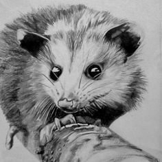 Our furry & feathered friends inspire love & creativity in us all. Opossum