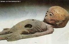 In 1997 during an excavations in El-Lahun, small Pyramid in southern Egypt, a Russian professor has discovered this alien body in a small chamber. The creature was 4.7 feet in length, and according to some speculations his alien dated about 1800 B.C. The alien was buried with precious and interesting items as well