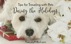 Tips for Traveling with Pets During the Holidays | http://www.thelazypitbull.com/traveling-with-pets/