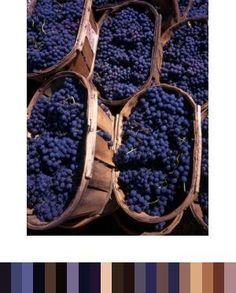 grape vineyard inspiration - great color pallet too!