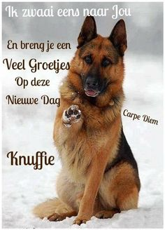 Even zwaaien Good Afternoon, Good Morning Quotes, Carpe Diem, Quote Prints, Picture Quotes, Good Night, Animals And Pets, Dog Cat, Images