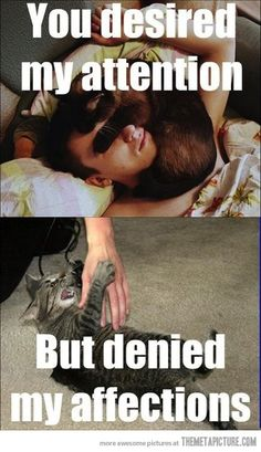 Misunderstood Cat<---And tellll me now, what was my fault, in lovinggg you with my whole heart?