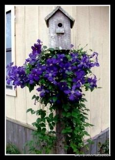 Love the clematis on the post. The birds would love it :) also a great way to give garden some quick, immediate height... #buildabirdhouse