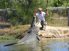 big crocodiles pictures | Large Crocodiles At Koorana Crocodile Farm