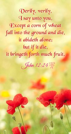 """John 12:24 """"Verily, verily, I say unto you, Except a corn of wheat fall into the ground and die, it abideth alone; but if it die, it bringeth forth much fruit."""""""