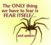 Ewww ~ I can't stand Spiders :/ Funny Things, Funny Stuff, Perfection Quotes, Bettering Myself, Word Art, Daily Inspiration, Dark Side, The Funny, My Best Friend