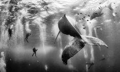 Las mejores 25fotografías deNational Geographic 2015