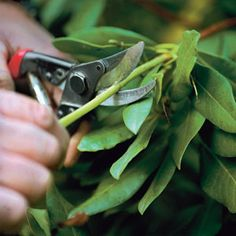 How To Prune Shrubs: A Guide To Pruning