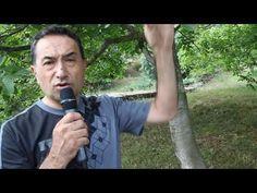 Dr. Feridun Kunak Şifalı Bitkiler Serisi ( Ceviz ) Şifalı Bitkiler Sağlıklı Bitkiler