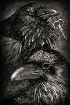 Raven mates, all things shiny