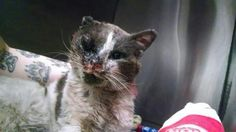 ONLY THE BROOD OF HUMAN DEVIANTS ARE CAPABLE OF SUCH HEINOUS ACTS  http://www.northjersey.com/mobile/news/three-paterson-boys-one-6-charged-in-fatal-attack-on-neighborhood-cat-1.1024811… pic.twitter.com/g4UIa5H2p4