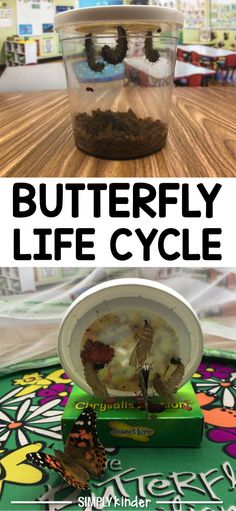 The butterfly life c