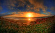 zonsondengang bij zee en rode bloemen