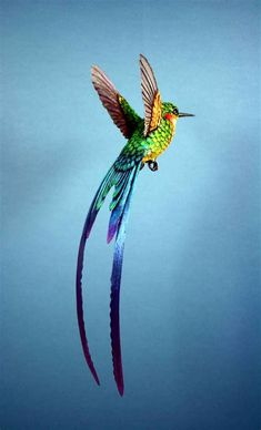 Paper and wood long tailed hummingbird sculpture — PAPER&WOOD Best Picture For Birds diy For Your Taste You are looking for something, and it is going to tell you exactly what you are looking for, and Images Colibri, Art Colibri, Tropical Birds, Exotic Birds, Colorful Birds, Hummingbird Pictures, Hummingbird Tattoo, Tattoo Bird, Pretty Birds