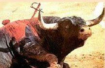 Artículo: Campaña contra las corridas de toros  {Escrito Julio de 2010}