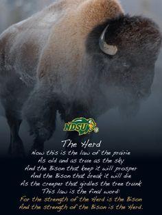 The law of the Prairie.... NDSU Bison Ndsu Bison Football, North Dakota State University, Sports Mom, Sports Teams, American Bison, Carson Wentz, American Football, College Football, Tailgating Ideas