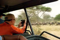 Kilimanjaro Climb, Private Safari, Safari Holidays, Tanzania Safari, Luxury Tents, Tour Operator, Once In A Lifetime, Africa, Tours