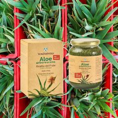 Vonderweid - Ricetta di Padre Romano Zago variante Senza Alcool è un preparato fresco e biologico di Aloe arborescens e miele, senza il… Aloe, Coffee, Drinks, Gifts, Instagram, Kaffee, Drinking, Beverages, Presents