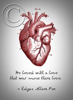 Poe's Anatomical Heart with Love Quote by DesignDivergent on Etsy