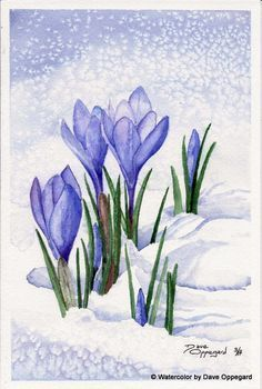 Spring Crocus Watercolor Art By Dave Oppegard Watercolor Pictures, Watercolor And Ink, Watercolour Painting, Watercolor Flowers, Painting & Drawing, Watercolors, Drawing Flowers, Guache, Pictures To Paint
