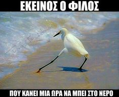 Greek Memes, Funny Greek, Greek Quotes, Funny Images, Funny Photos, Stupid Funny Memes, Hilarious, Funny Statuses, Funny Bunnies