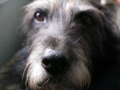 oh my sweet Winnie D Blog - 29 Black Street