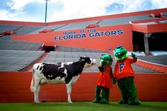 What is our cow saying to Albert and Alberta? Go to our Facebook page and write your best caption and you could win 4 suite tickets to Gator Growl and the homecoming game!