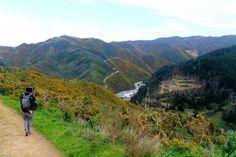 Top 8 walks to take around Wellington, NZ