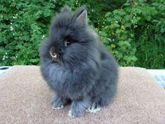 dwarf bunnies - Bing Images