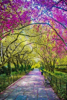 Spring, Central Park, New York City. This picture made me need to go to Central Park in the spring. I already think that it's beautiful, but this is just fantastically so. Beautiful World, Beautiful Places, Wonderful Places, Amazing Things, Simply Beautiful, Beautiful Park, Absolutely Gorgeous, New York City Photos, Central Park