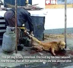 """Dogs are not the only animals that suffer. Please consider going vegan.  """"Who ever supports this is a monster and should burn in a fire Be a guardian of animals everywhere by becoming an ambassador at http://www.fuzeus.com"""""""