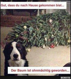 Ohnein der arme Baum!