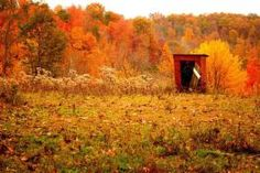 Rural outhouse in autumn
