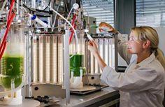 LED-bioreactors - Algix