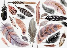 Margaret Berg Art : Illustration : all occasion / novelty Feather Drawing, Feather Painting, Feather Art, Bird Feathers, Art Aquarelle, Watercolor Paintings, Tattoo Watercolor, Art Plastique, Painting & Drawing