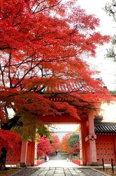 Gardening Autumn - Kyoto, Japón Hojas de otoño de Kyoto estilo de vida japonés With the arrival of rains and falling temperatures autumn is a perfect opportunity to make new plantations Places To Travel, Travel Destinations, Places To Visit, Travel Tips, Travel Vlog, Travel Abroad, Travel Deals, Solo Travel, Travel Essentials