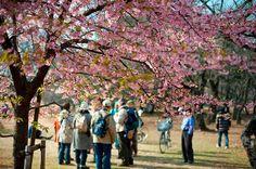 Du lịch Vietravel: Những điểm không thể bỏ qua khi đi du lịch Tokyo. Có lẽ thủ đô Tokyo là đại diện tiêu biểu nhất cho sự giao thoa giữa hiện đại và truyền thống của du lịch Nhật Bản. Thành phố luôn là một điểm đến hấp dẫn hàng đầu đối với du khách khi đang lên kế hoạch chu du  xứ sở Phù Tang.
