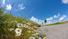 Die Insel Fehmarn wirbt gerne damit, daß sie die sonnenreichste Insel Deutschlands ist und lauten den Statistiken des deutschen Wetteramtes ist dieses auch korrekt, da es laut …