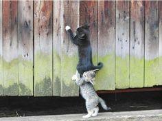 cutie kitties teamwork