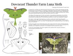 Luna Moths are so beautiful and graceful. Count yourself lucky if you've seen one – they live such short lives. Just a couple of months and it will be the season for these elegant creat… Bird Christmas Ornaments, Felt Ornaments, Felt Sheets, Felt Decorations, Felt Patterns, Summer Crafts, Felt Animals, Felt Crafts, Marie
