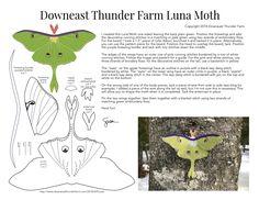 The Lovely Luna Moth | Downeast Thunder Farm