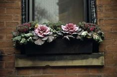 Cabbage container Who says window boxes are just for flowers? Plant some ornamental cabbage and flowering kale, and you'll get amazing tex...