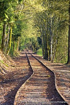 Vanishing Point   Train tracks lead to somewhere down the li…   Gary Grossman   Flickr